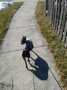 Walking Sabo